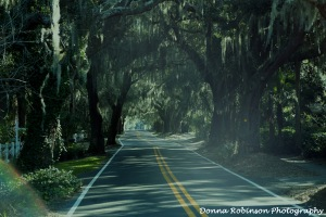 Spanish Moss drapes the overhanging trees of Old Demere Rd.