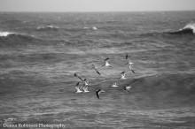 img_6845-birds-king-prince-022317
