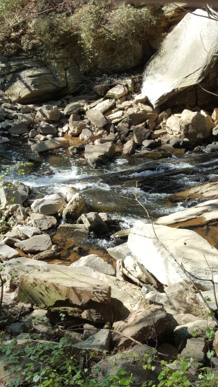 RottenWood Creek