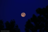 IMG_9400 060917 The Setting Moon