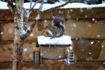 IMG_3656 120817 Atlanta Snow copyright
