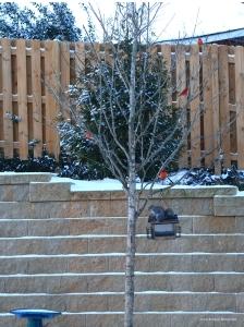 IMG_3919 011718 Atlanta Snow