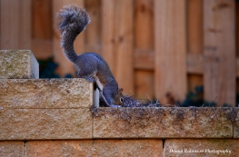 IMG_4492 030418Squirrels copyright
