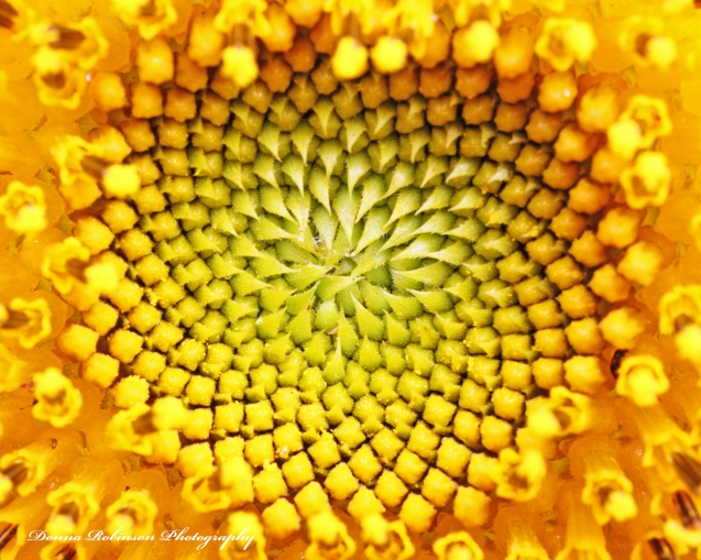 Sunflower Macro Photography